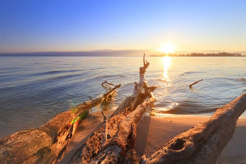 Κούτσουρο που βρίσκεται στην ακτή μιας παραλίας στοκ φωτογραφίες με δικαίωμα ελεύθερης χρήσης
