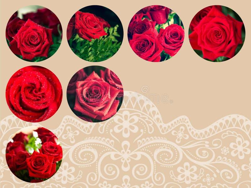 Κολάζ του φυσικού κόκκινου υποβάθρου τριαντάφυλλων στοκ φωτογραφία