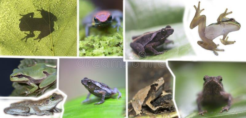 Κολάζ των διαφορετικών ειδών βατράχων στοκ εικόνα με δικαίωμα ελεύθερης χρήσης