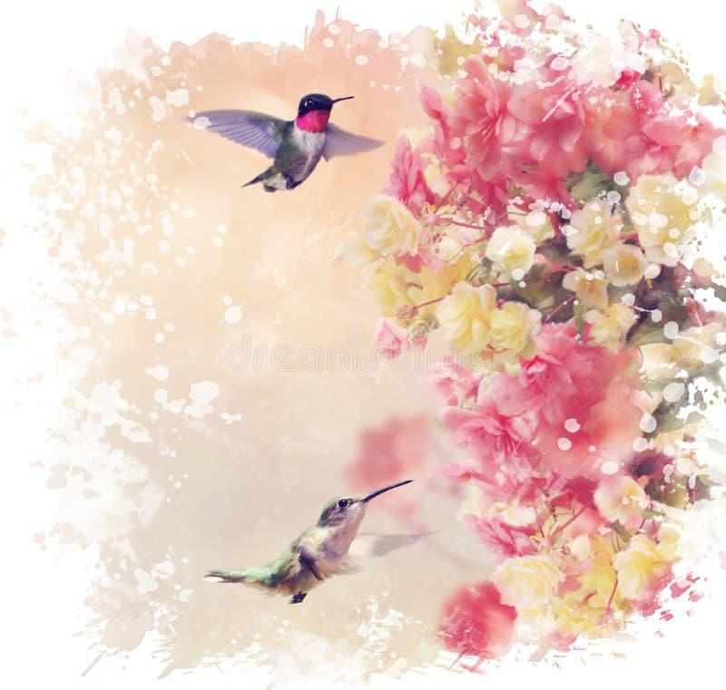 Κολίβρια και λουλούδια Watercolor ελεύθερη απεικόνιση δικαιώματος