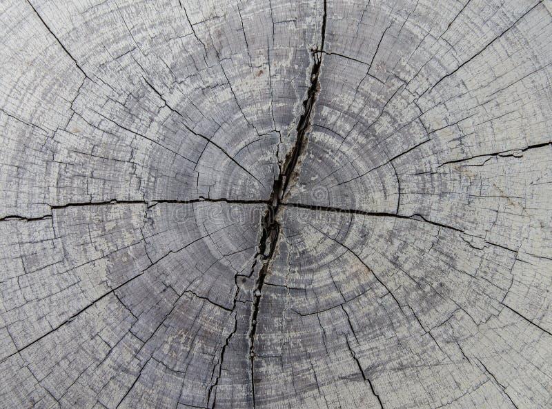 Κολοβώματα δέντρων και καταρριφθείσα δασική αποδάσωση στοκ εικόνα με δικαίωμα ελεύθερης χρήσης
