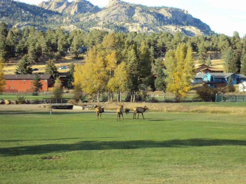 Κολοράντο το φθινόπωρο στοκ φωτογραφία με δικαίωμα ελεύθερης χρήσης