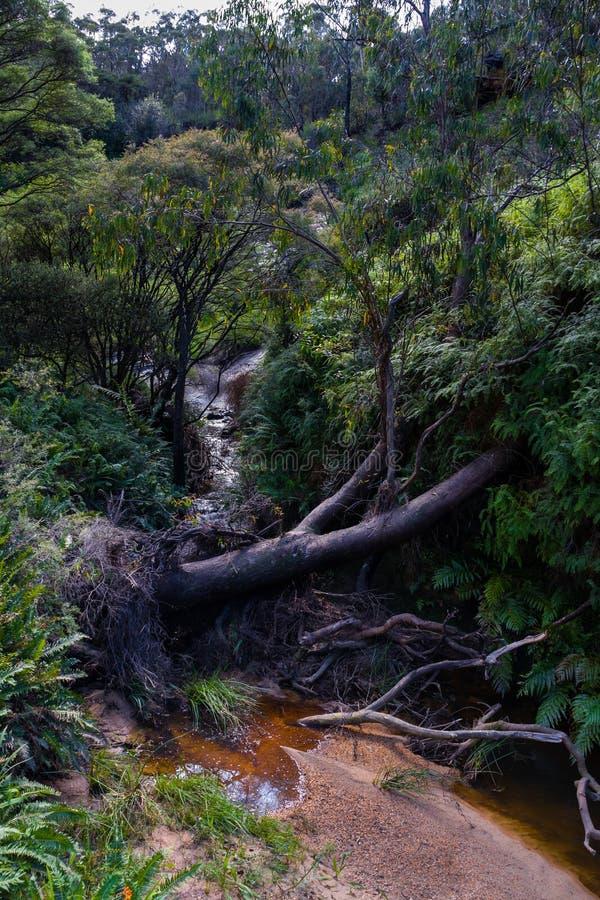Κολπίσκος στον περίπατο του Charles Δαρβίνος μπλε εθνικό πάρκο βουνών Aust στοκ εικόνες με δικαίωμα ελεύθερης χρήσης
