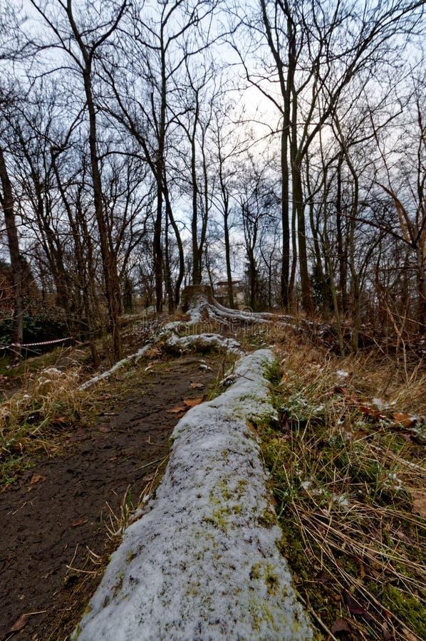 Κολόβωμα δέντρων και η μακροχρόνια ρίζα του στοκ φωτογραφία