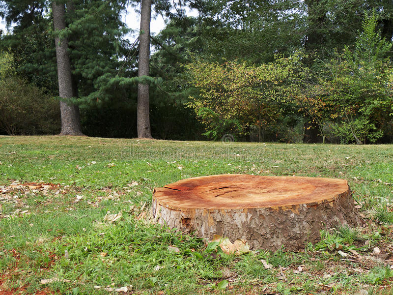 Κολόβωμα δέντρων στο δάσος στοκ εικόνα