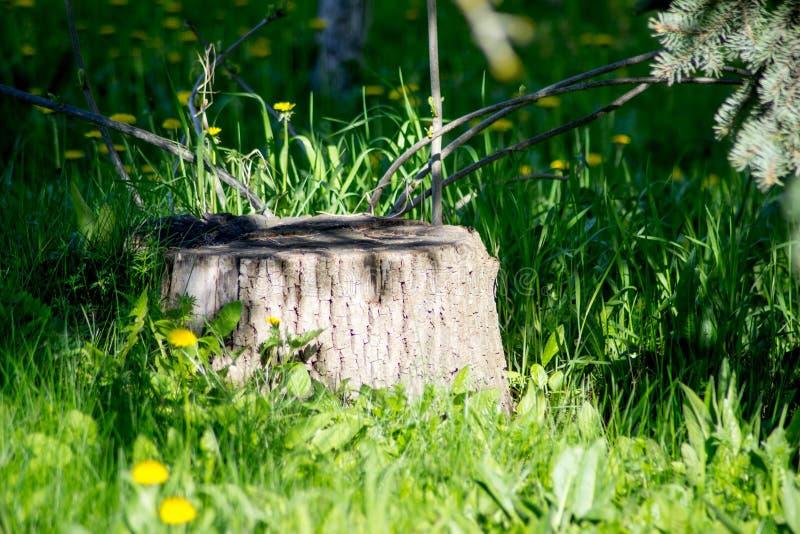 Κολόβωμα μεταξύ του καλοκαιριού δέντρων στοκ εικόνα με δικαίωμα ελεύθερης χρήσης