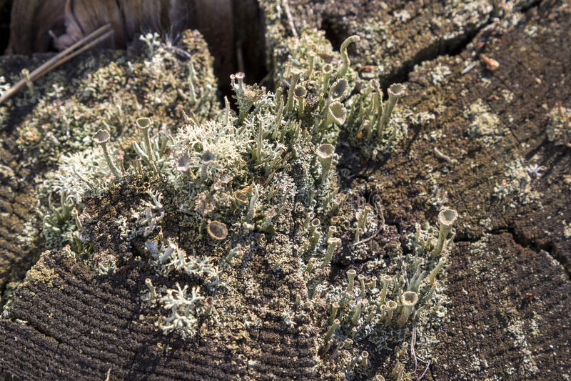 Κολόβωμα στο βρύο στο δάσος φθινοπώρου στοκ φωτογραφία με δικαίωμα ελεύθερης χρήσης