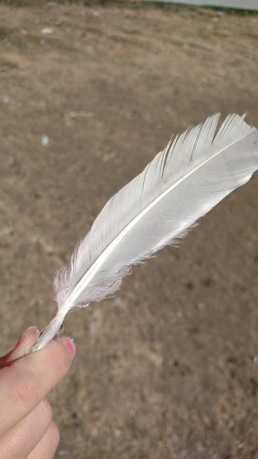 κράτημα ενός φτερού στοκ φωτογραφία με δικαίωμα ελεύθερης χρήσης