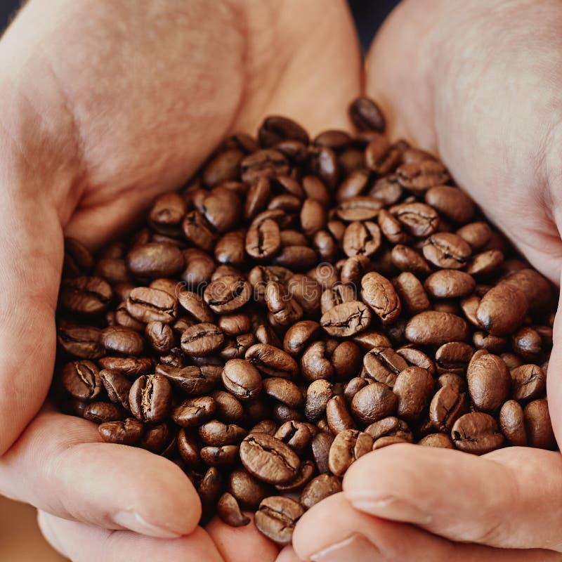 κράτημα χεριών καφέ φασολιώ στοκ εικόνες