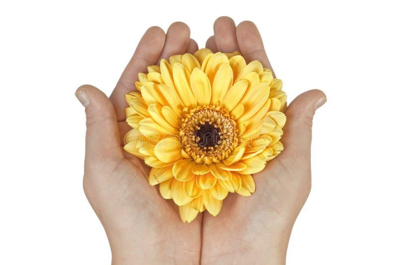 κράτημα χεριών λουλουδ&iota στοκ φωτογραφία με δικαίωμα ελεύθερης χρήσης
