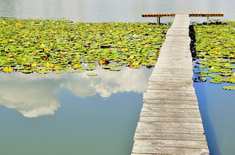 Κρίνοι λιμνών, αποβαθρών και νερού στοκ φωτογραφία με δικαίωμα ελεύθερης χρήσης