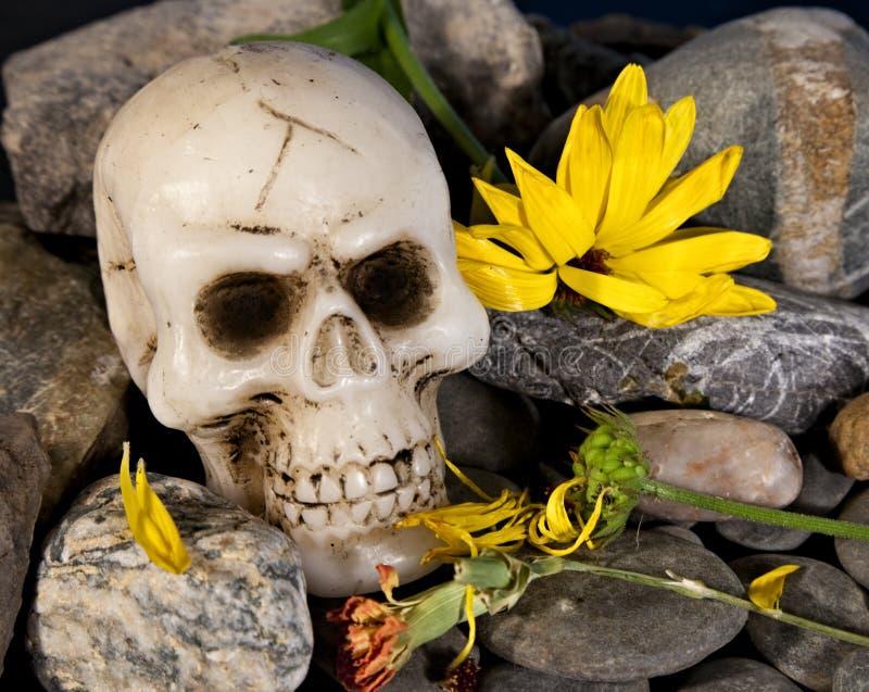 κρανίο λουλουδιών στοκ εικόνες
