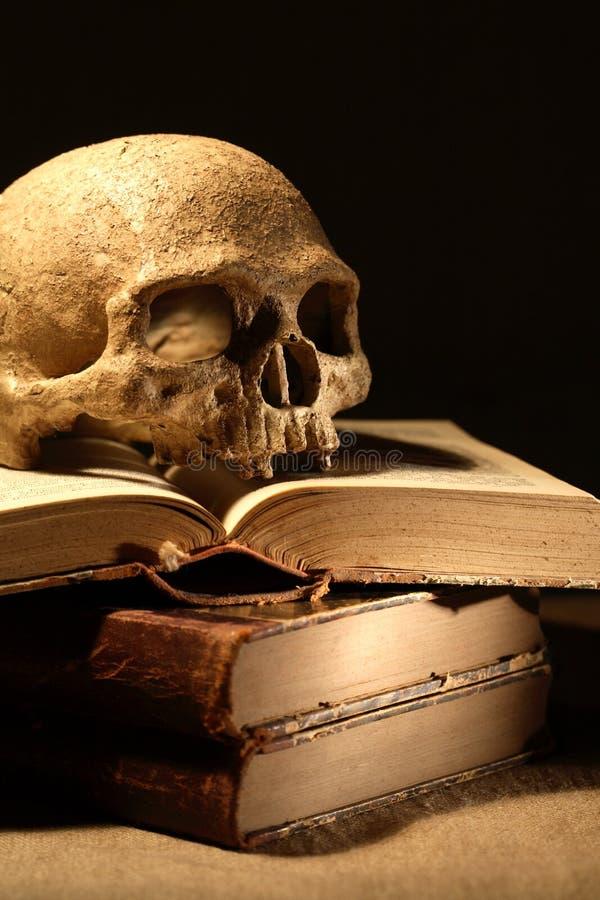 Κρανίο στα βιβλία στοκ εικόνα