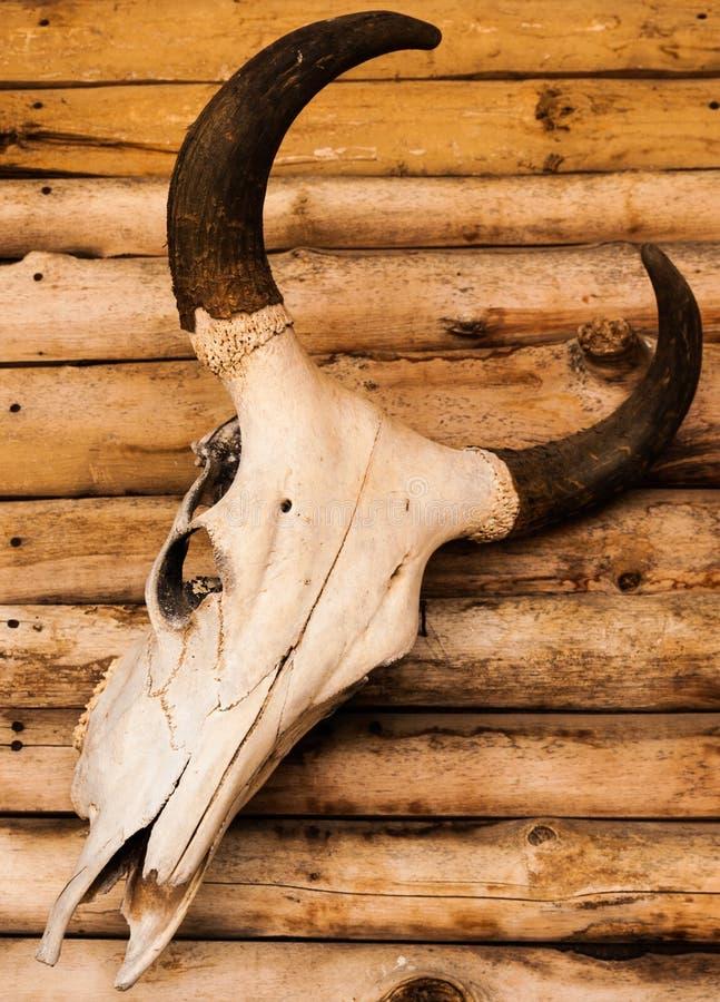 Κρανίο του ταύρου στοκ φωτογραφίες