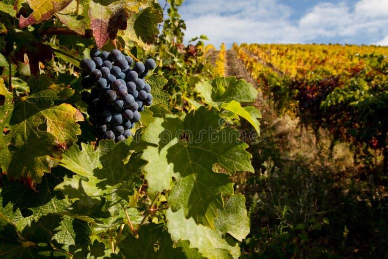κρασί αμπελώνων λιμένων στ&alpha στοκ φωτογραφία