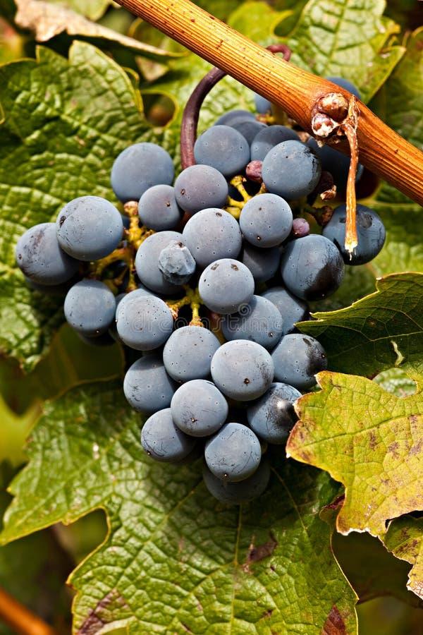 κρασί αμπελώνων λιμένων στ&alpha στοκ φωτογραφίες