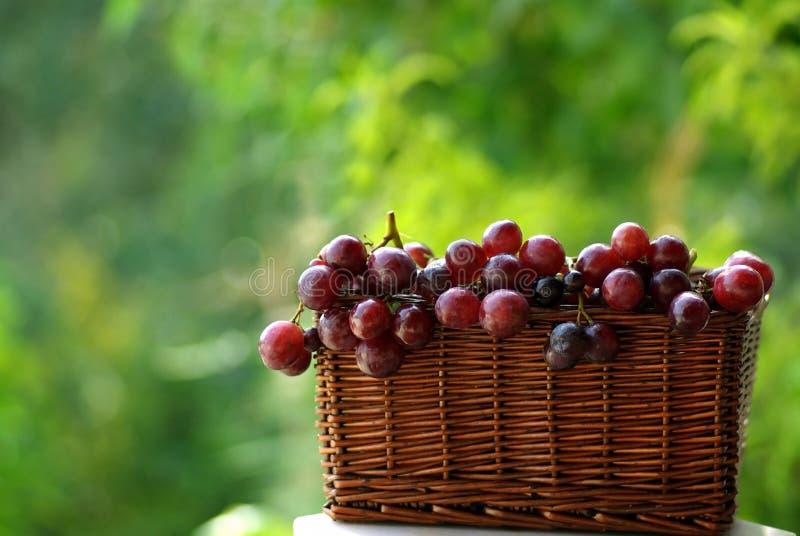 κρασί σταφυλιών καλαθιών στοκ εικόνες