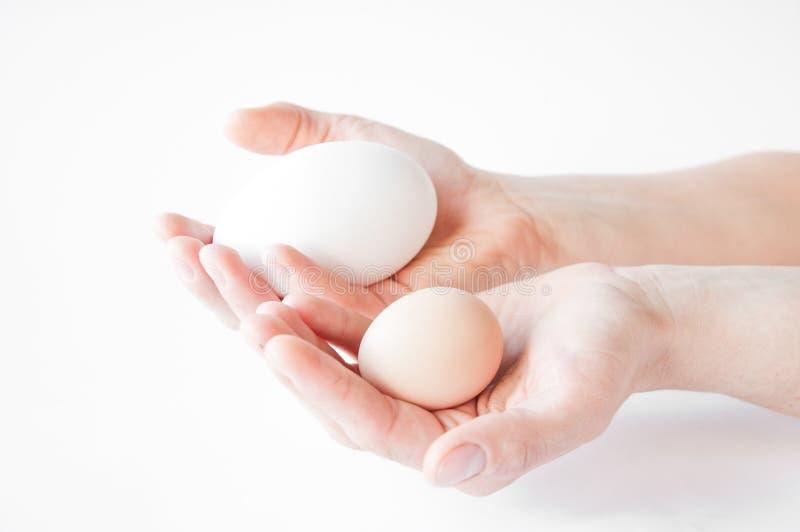 Κρατά και στα χέρια ένα μεγάλο άσπρο και μικρό αυγό σε ένα άσπρο υπόβαθρο στοκ φωτογραφία
