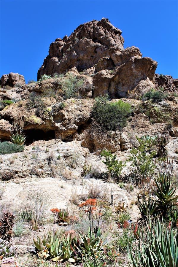 Κρατικό πάρκο δενδρολογικών κήπων Thompson Boyce, ανώτερος, Αριζόνα Ηνωμένες Πολιτείες στοκ φωτογραφίες με δικαίωμα ελεύθερης χρήσης
