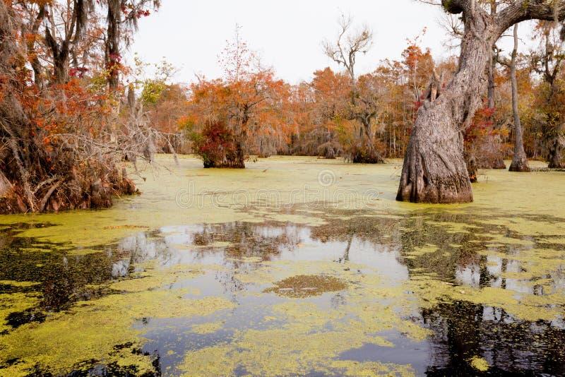 Κρατικό πάρκο ΗΠΑ δεξαμενών υδρόμυλου NC εμπόρων υγρότοπου δασικό στοκ εικόνες με δικαίωμα ελεύθερης χρήσης