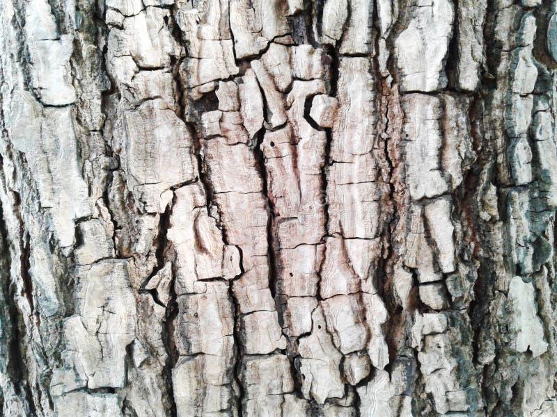 κραχτών Παλαιό ξύλινο υπόβαθρο σύστασης δέντρων Ο φυσικός φλοιός κινηματογραφήσεων σε πρώτο πλάνο επιζητά στοκ εικόνα με δικαίωμα ελεύθερης χρήσης