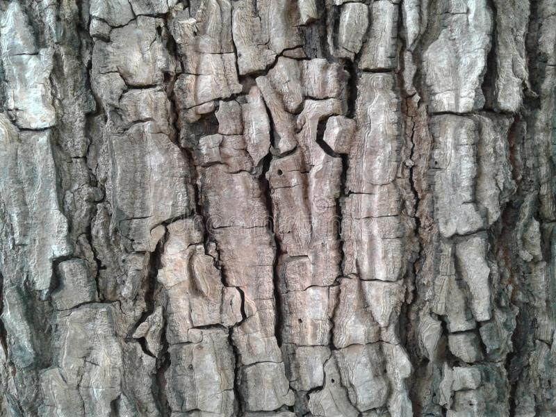 κραχτών Παλαιό ξύλινο υπόβαθρο σύστασης δέντρων Ο φυσικός φλοιός κινηματογραφήσεων σε πρώτο πλάνο επιζητά στοκ φωτογραφία