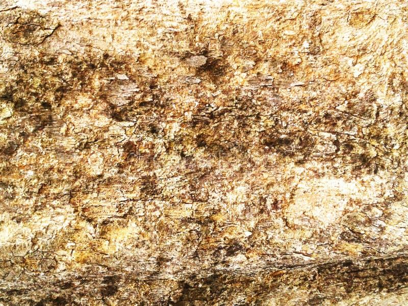 κραχτών Παλαιό ξύλινο υπόβαθρο σύστασης δέντρων Ο φυσικός φλοιός κινηματογραφήσεων σε πρώτο πλάνο επιζητά στοκ εικόνες