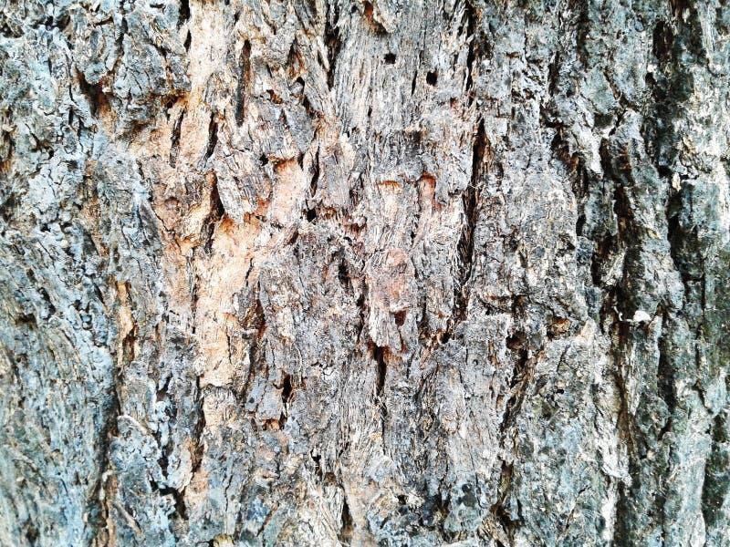κραχτών Παλαιό ξύλινο υπόβαθρο σύστασης δέντρων Ο φυσικός φλοιός κινηματογραφήσεων σε πρώτο πλάνο επιζητά στοκ εικόνες με δικαίωμα ελεύθερης χρήσης
