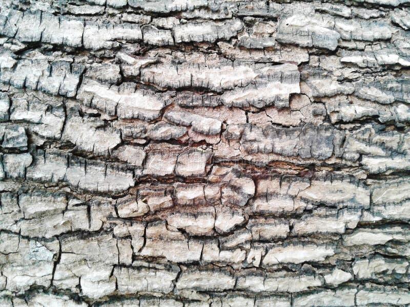 κραχτών Παλαιό ξύλινο υπόβαθρο σύστασης δέντρων Ο φυσικός φλοιός κινηματογραφήσεων σε πρώτο πλάνο επιζητά στοκ φωτογραφίες