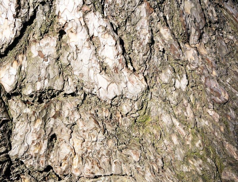 κραχτών Υπόβαθρο ενός φλοιού δέντρων στοκ εικόνα με δικαίωμα ελεύθερης χρήσης
