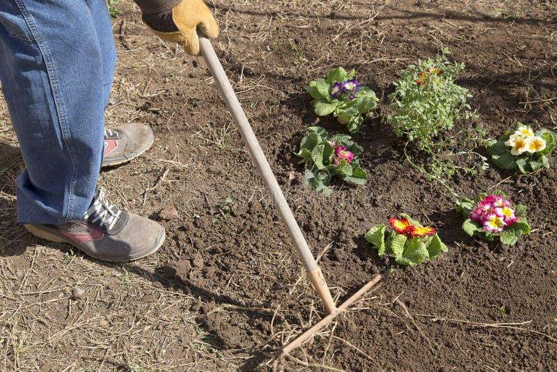 Κρεβάτι κηπουρών και λουλουδιών στοκ εικόνα με δικαίωμα ελεύθερης χρήσης