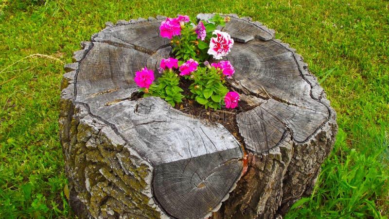 Κρεβάτι λουλουδιών στην κάνναβη στοκ εικόνα