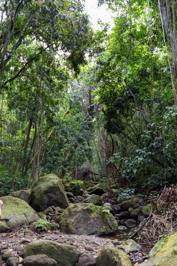 Κρεβάτι ρευμάτων τροπικών δασών με το mossy βράχο στοκ εικόνα