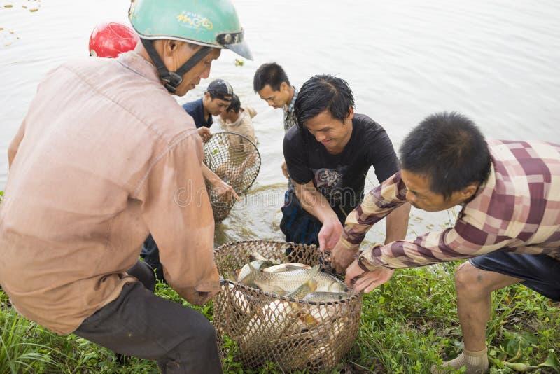Κρεμασμένα γεν, Βιετνάμ - 26 Ιουλίου 2015: Αγρότες που συγκομίζουν τα ψάρια από τη λίμνη σε κρεμασμένα γεν στοκ εικόνες