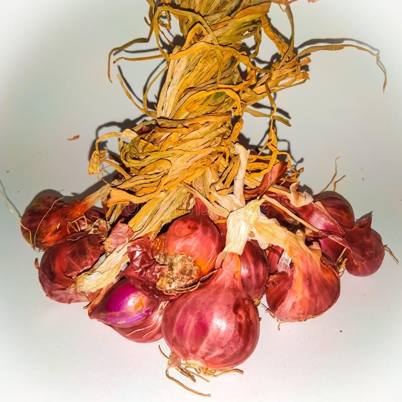 Κρεμμύδια με μοβ χρώμα στοκ εικόνα