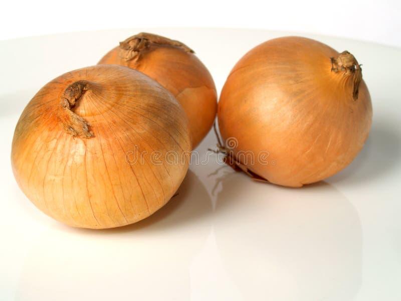 κρεμμύδια στοκ εικόνα