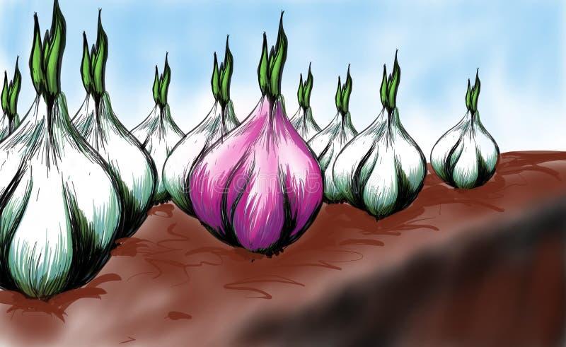 Κρεμμύδι στον κήπο απεικόνιση αποθεμάτων