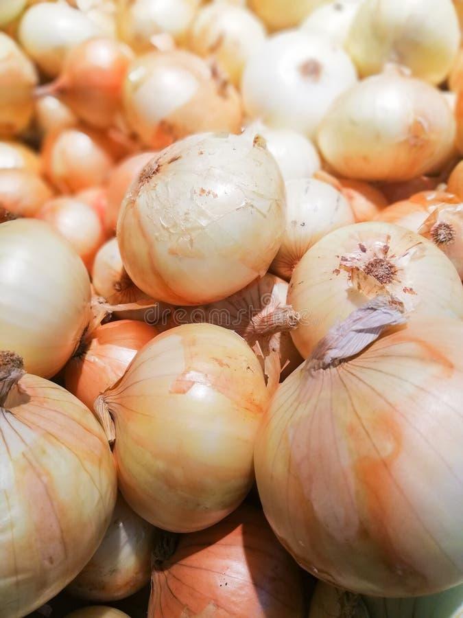 Κρεμμύδι στο suppermaket στοκ φωτογραφία με δικαίωμα ελεύθερης χρήσης