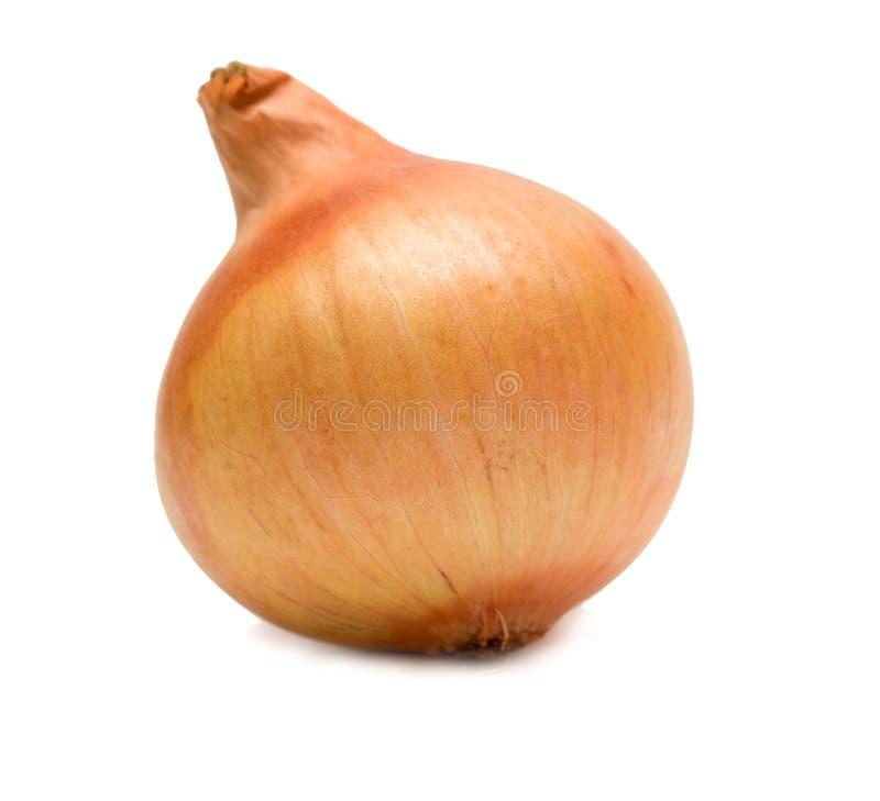 κρεμμύδι ώριμο στοκ φωτογραφία με δικαίωμα ελεύθερης χρήσης