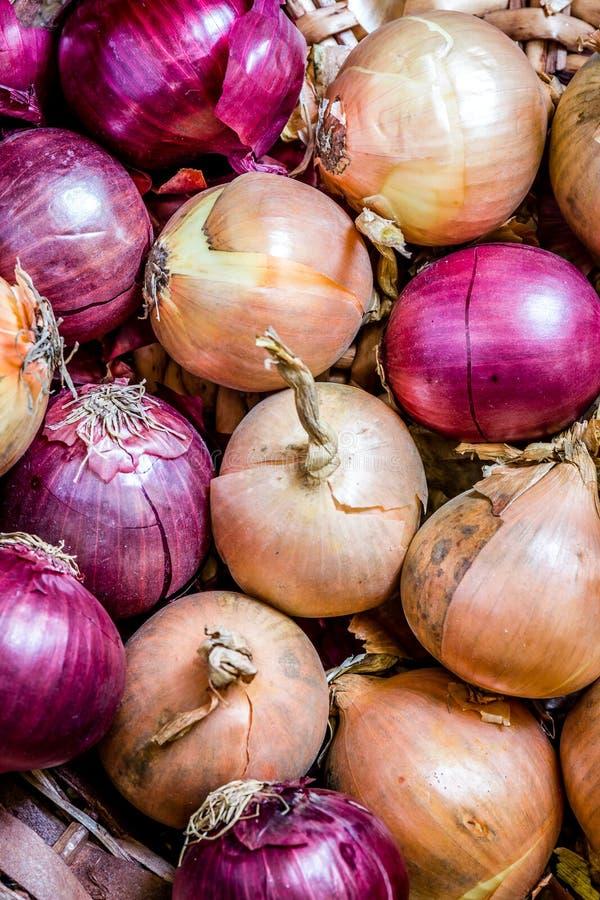 Κρεμμύδια και κόκκινα κρεμμύδια στοκ φωτογραφία με δικαίωμα ελεύθερης χρήσης