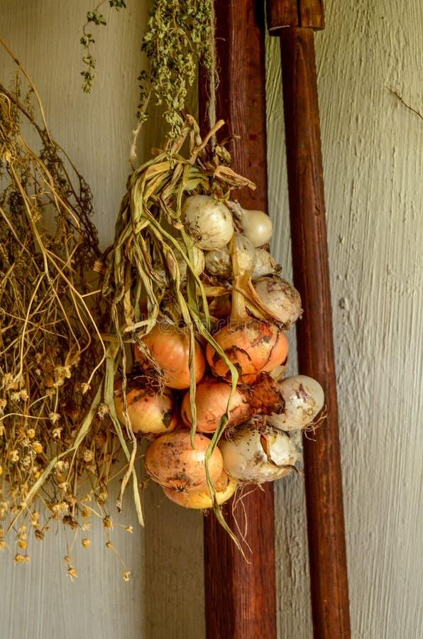 κρεμώντας κρεμμύδια στοκ εικόνα
