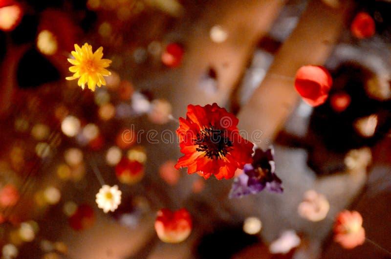 Κρεμώντας λουλούδια στοκ εικόνες