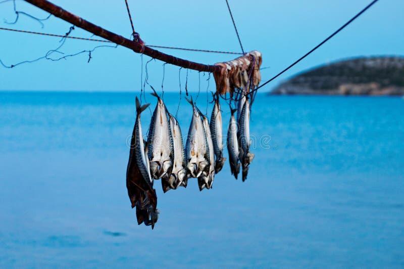 Κρεμώντας ψάρια στοκ φωτογραφίες με δικαίωμα ελεύθερης χρήσης