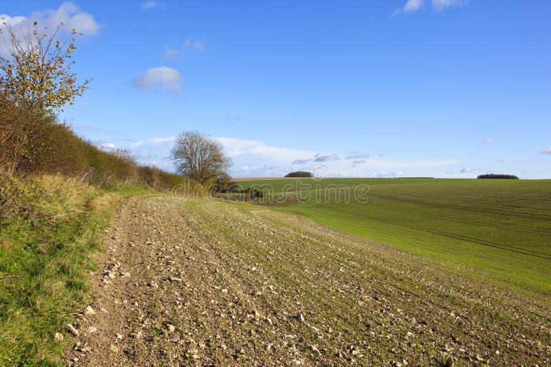 Κρητιδικός διαχωριστικός φράχτης χώματος και φθινοπώρου στοκ φωτογραφία με δικαίωμα ελεύθερης χρήσης