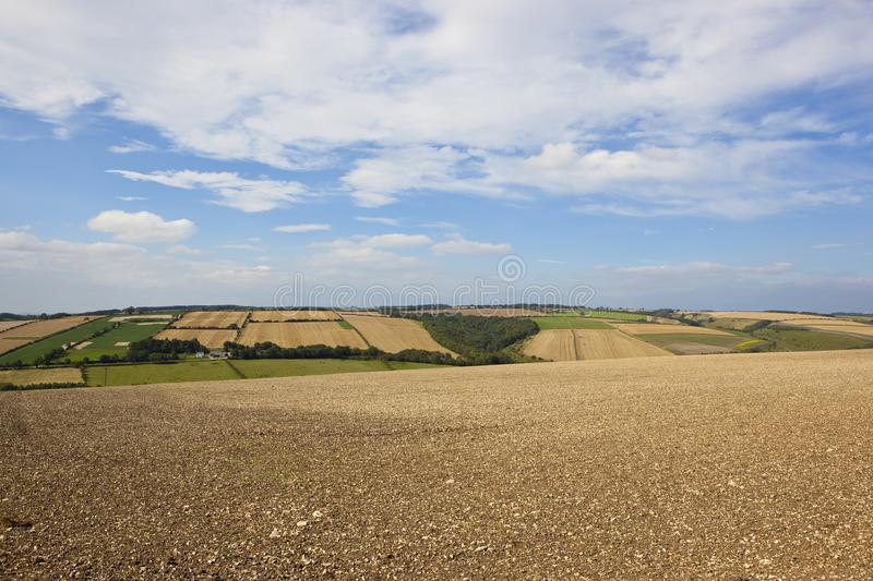 Κρητιδικός καλλιεργημένος τομέας στοκ εικόνα με δικαίωμα ελεύθερης χρήσης