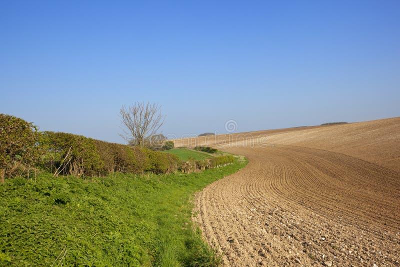 Κρητιδικοί οργωμένοι χώμα και διαχωριστικός φράχτης στοκ φωτογραφία
