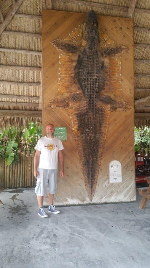 Κροκόδειλος πόλεων της Φλώριδας everglades στοκ φωτογραφίες