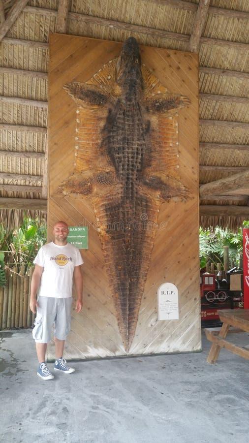Κροκόδειλος πόλεων της Φλώριδας everglades στοκ εικόνα
