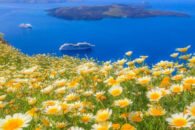 Κρουαζιερόπλοιο και κίτρινα λουλούδια, Σαντορίνη, Ελλάδα στοκ φωτογραφίες με δικαίωμα ελεύθερης χρήσης