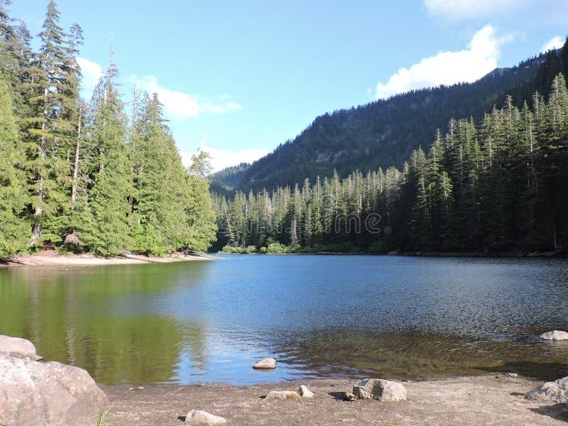 Κρυμμένη δάσος λίμνη Wanatchee στοκ εικόνες